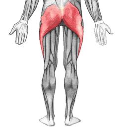 gluteos-musculos-que-intervienen-en-la-practica-de-la-carrera-continua